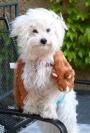 Puppy Love = MORELOVE!